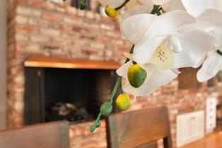 Orchid Artsy.jpg