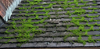 how-to-remove-moss-roof.jpg