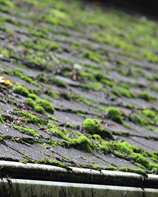 Roof Moss Removal Bedfordshire