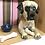 Thumbnail: 'Desmond the Great Dane' Dog Box by Sarah Robertson