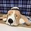 Thumbnail: 'Mabel the Basset' Dog House by Sarah Robertson