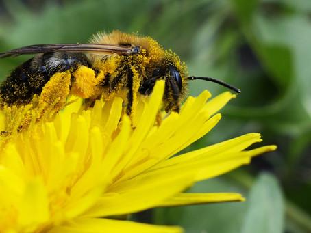 Παγκόσμια Ημέρα Μέλισσας από τον ΟΗΕ!
