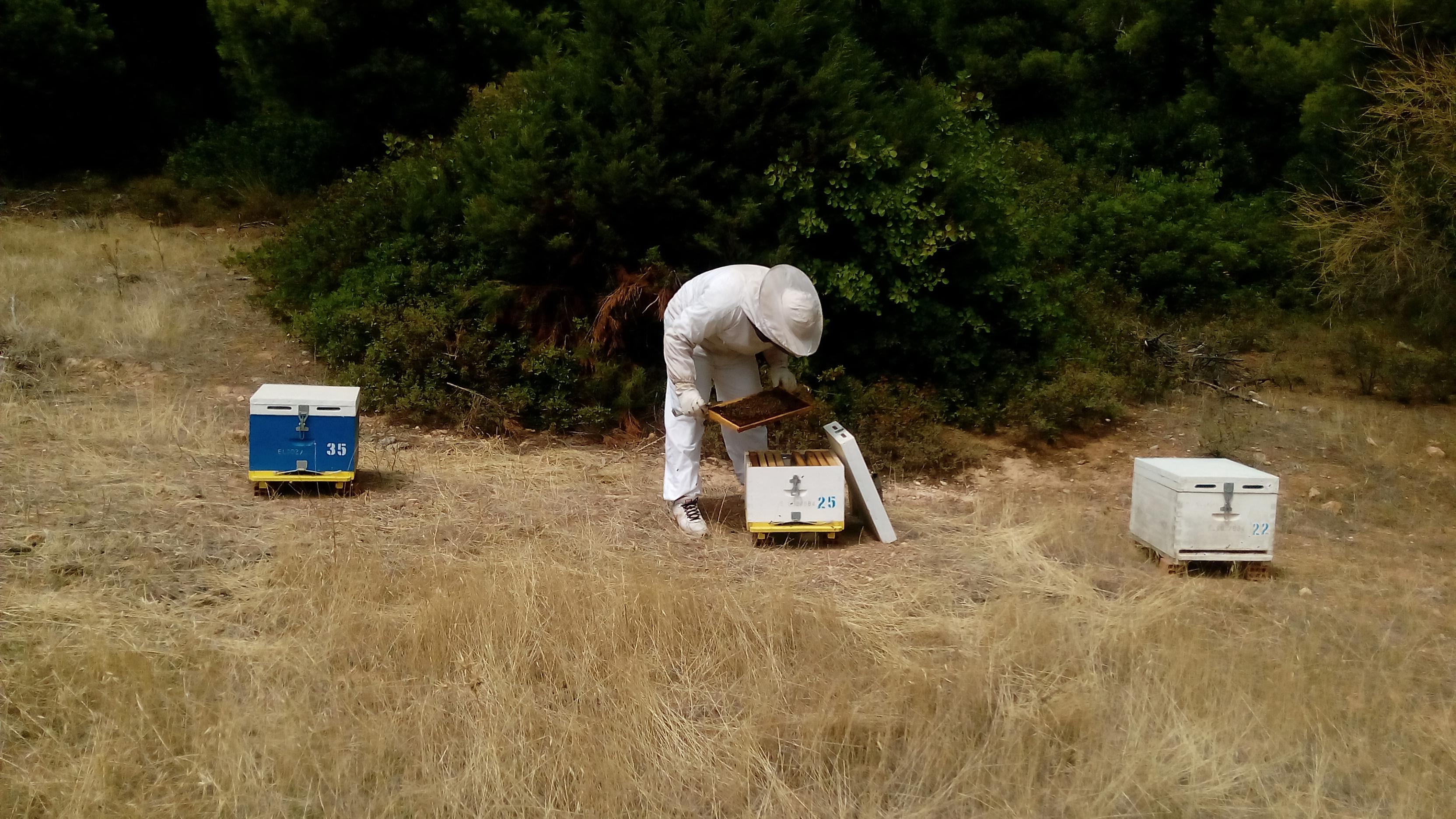 Μελίριο Επιθεώρηση μελισσών