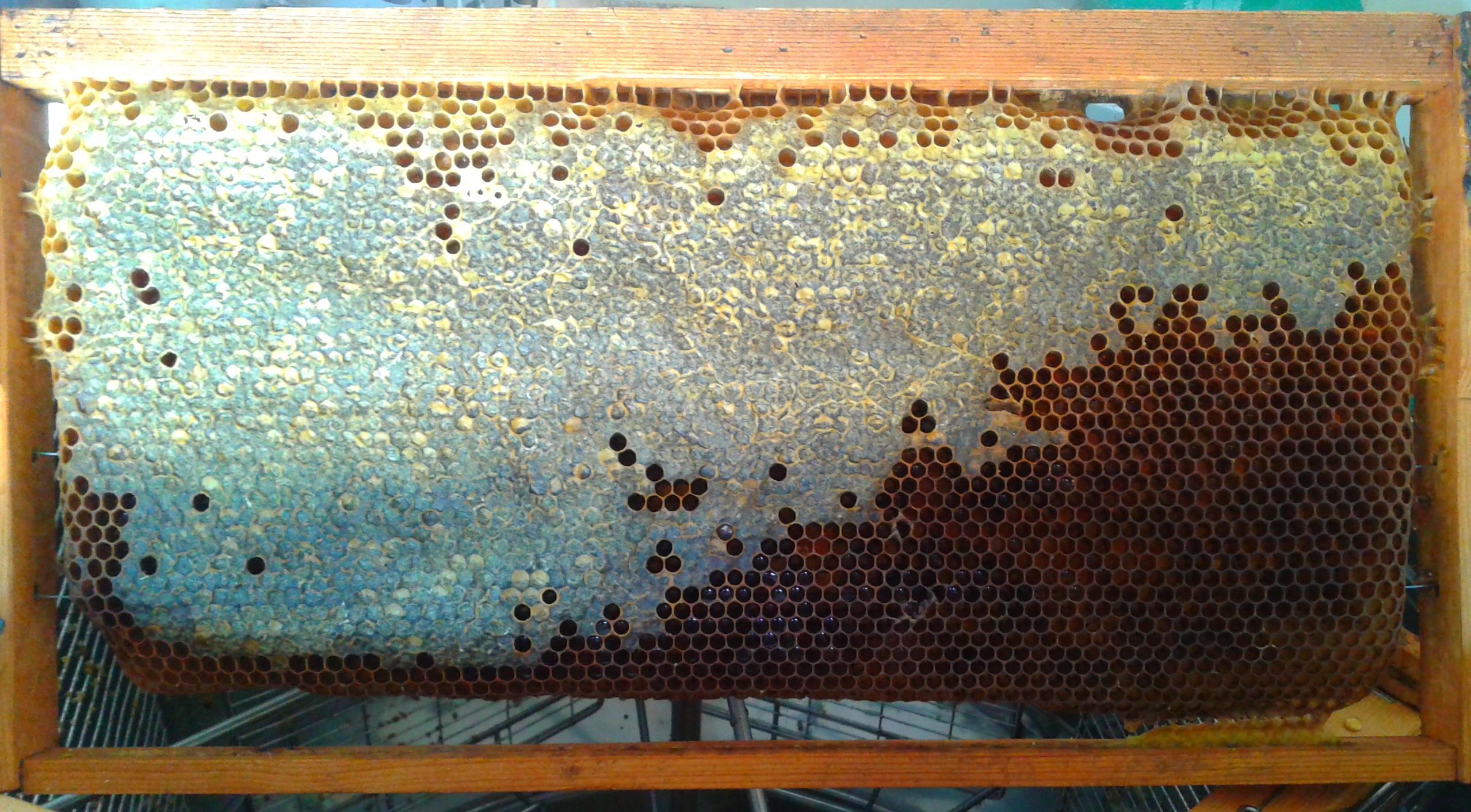 Μελίριο Πλαίσιο με μέλι