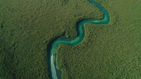 Mangrove Cancun_1.3.1_s.jpg