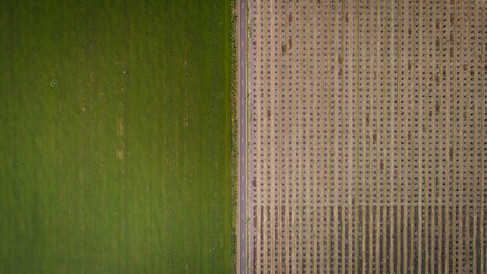 Farm Land_1.8.1.jpg
