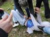 Ragazza di 18 anni violentata da un gruppo di ragazzi. Il padre li difende.