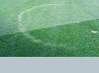 Fairy Rings lawn disease