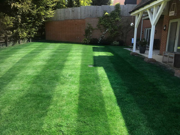 New lush lawn