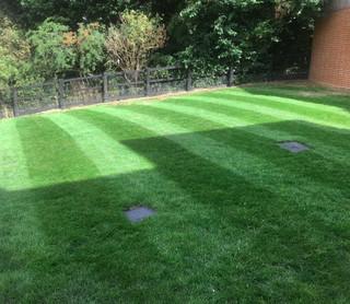 Rejuvenated lawn