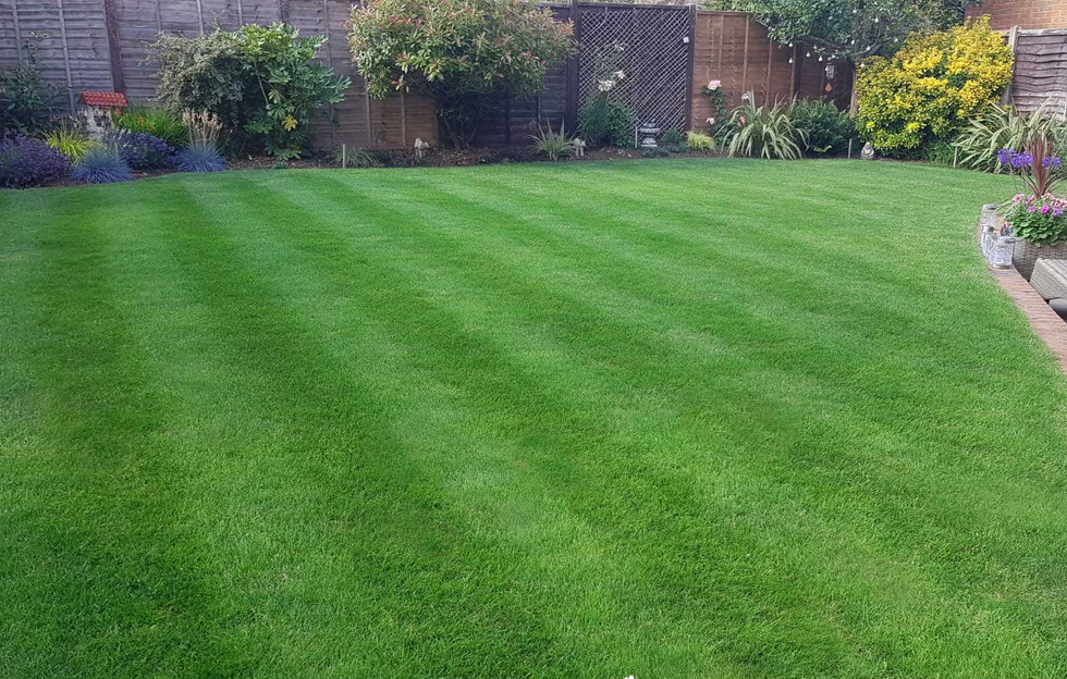 Lawn17