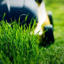 Lawn Problems & Advice
