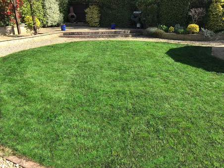 reinvigorated lawn