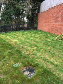 Heavy lawn cut