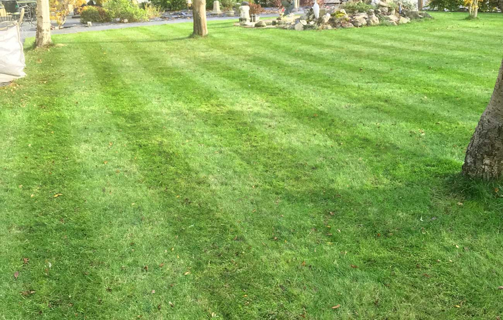 Lawn11