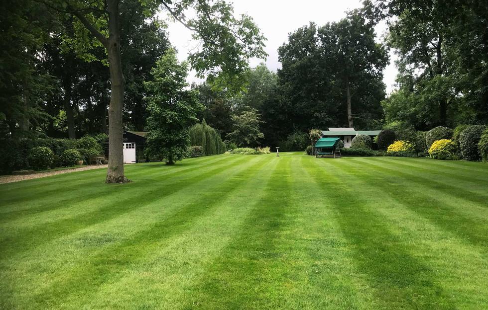Lawn7