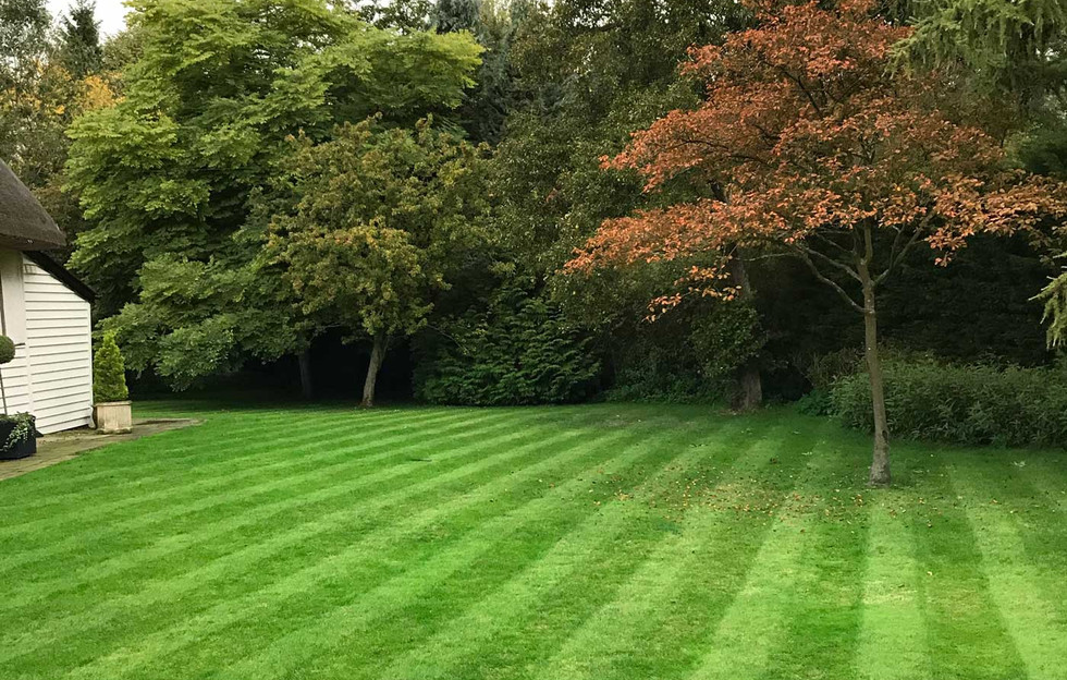 Lawn14