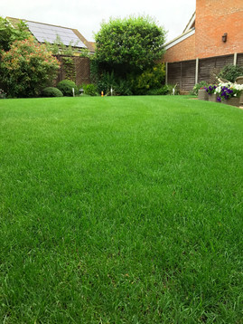 Healthy grass growth