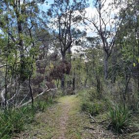 Marsdenia Rainforest Walk