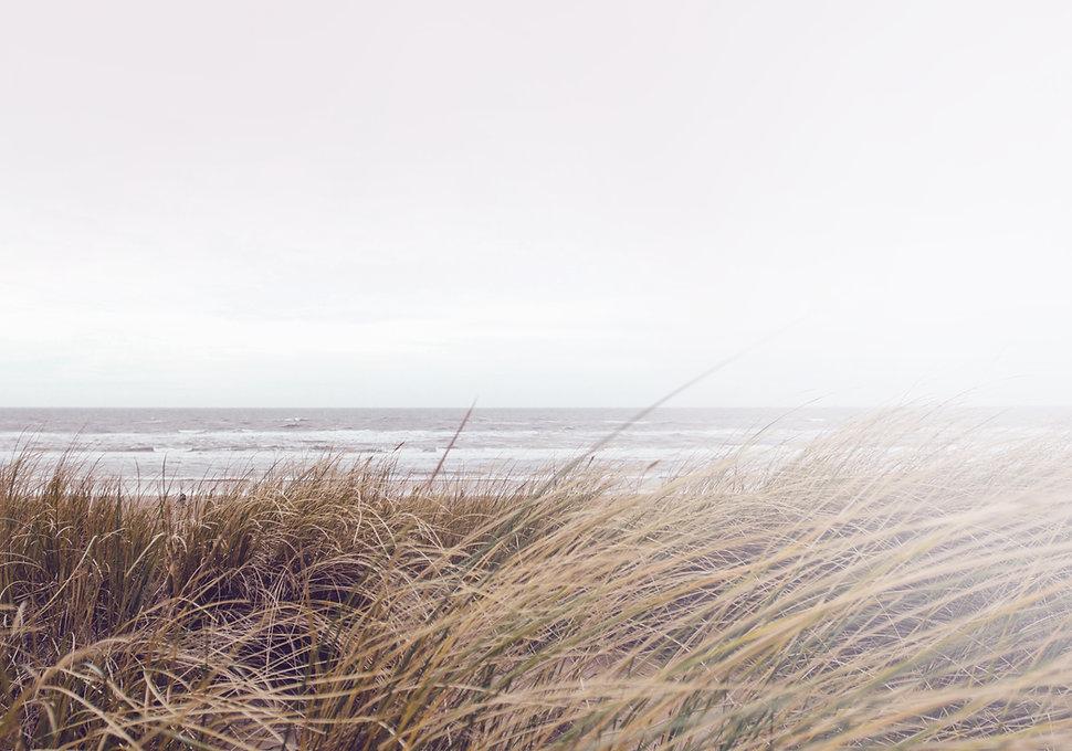 Sea Grass