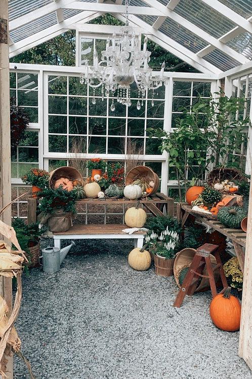 Greenhouse Fall Minis