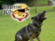 Superior K9, superior, german shepherds, shepherd, malinois, schutzhund, police, best, top, k9, breeders, obedience, training, dog, gsd, georgia, ga, detection, K-9, sable, champions, import, personal protection, obedience, sheriff, puppy, puppies