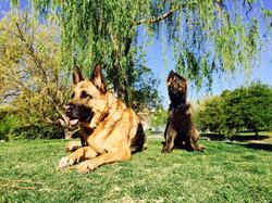 Bruno and Dante