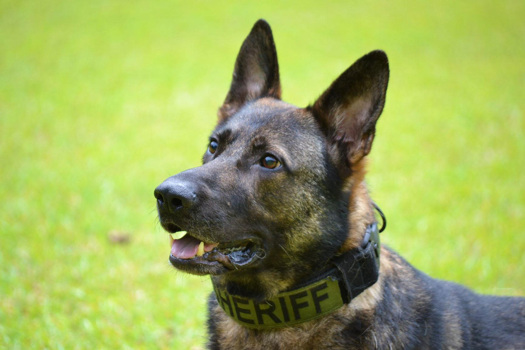 Police K9 Chip