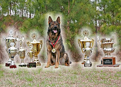 Superior K9, superior, german shepherds, shepherd, schutzhund, police k9, best, top, breeder, breeders, obedience, training, dog, gsd, nike, georgia, ga, detection, K-9, sable, champions, import, imported, personal protection, protect, sheriff, ace of