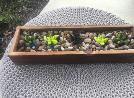 Succulent Scapes