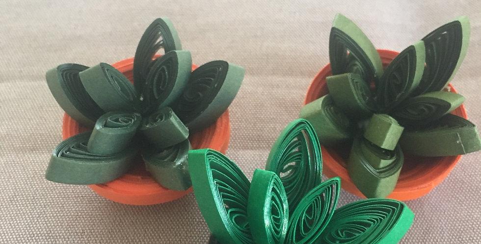 DIY succulent kit