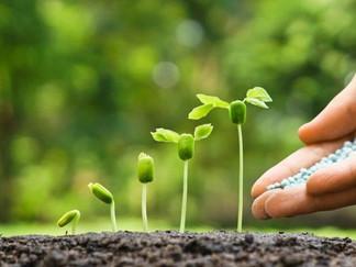 Continue plantando