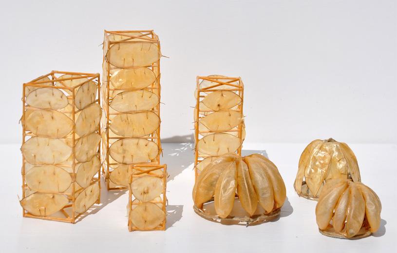 giulia_berra,_città_di_baccelli,_legno,_colla,_baccelli,_dimensioni_variabili,_2011_