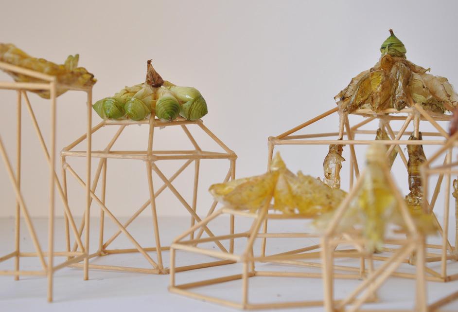 Giulia_Berra,_senza_titolo_(città_di_crisalidi),_2011,_legno,_colla,_crisalidi,_dimensioni_variabili