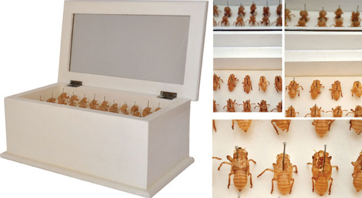 Giulia Berra, AUTOBIOGRAFICA, case, cicada exuviae, fabric, pins, 2009, contemporary art sculpture with insect spoils