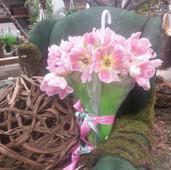 Umbrella Tulips