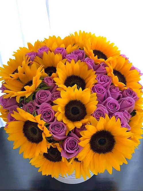 Girasoles purpura