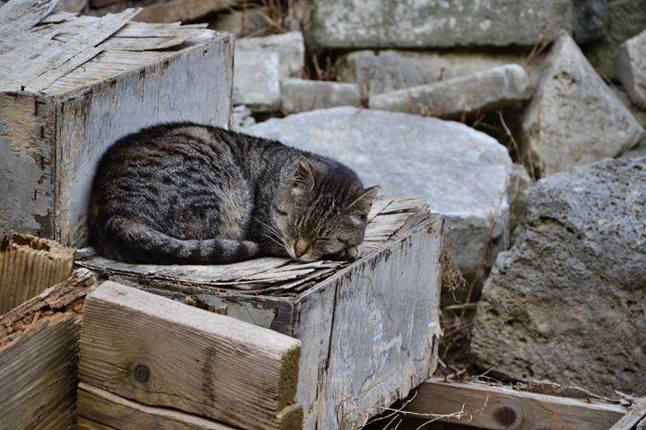 Cat Nap - Rome Italy