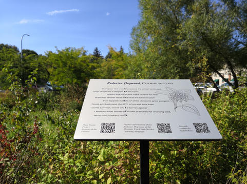 The sign for Red Osier Dogwood with a large willow and other trees and shrubs in the background