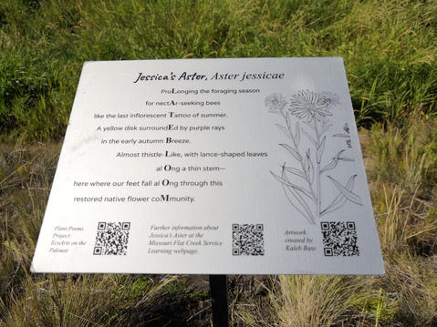 The sign for Jessica's Aster with bunchgrasses and other native fauna in the background