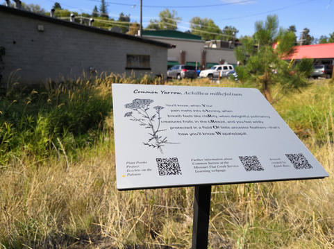 The sign for Common Yarrow with buildings on Grand Avenue in the background