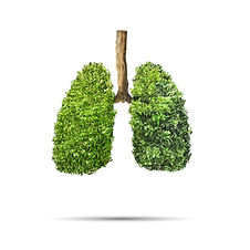 Green leaves shaped in human lungs. Conc