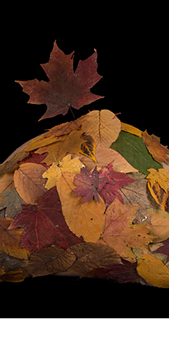 BENEDICTE VENTRE FALL LEAVES 01_11_2013 _-18-Edit-2.jpg