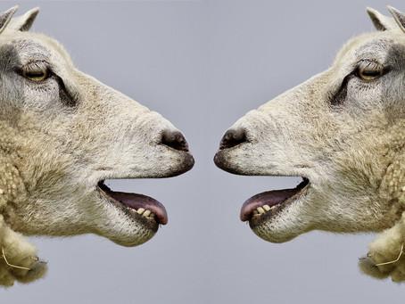 Typische Kommunikationsfallen und wie du damit umgehen kannst