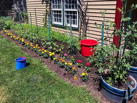 Vegetable gardening 1.jpg