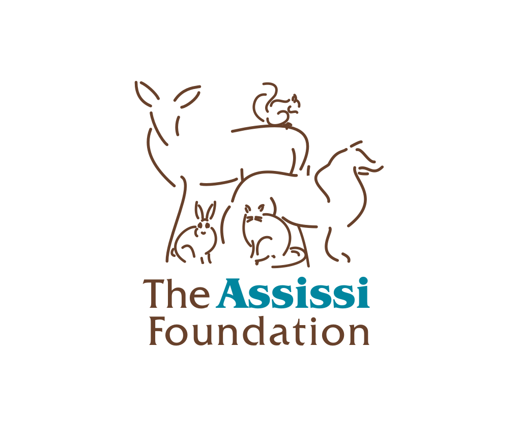 Assissi Foundation