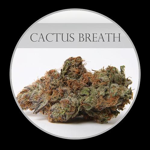 Cactus Breath AAAA