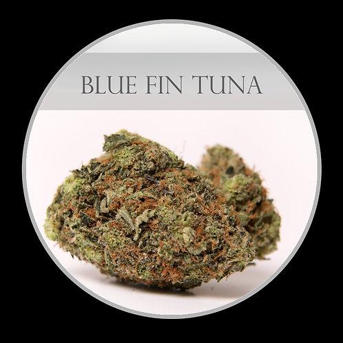 Blue Fin Tuna AAA