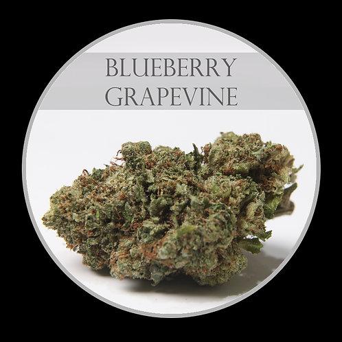 Blueberry Grape Vine AAA