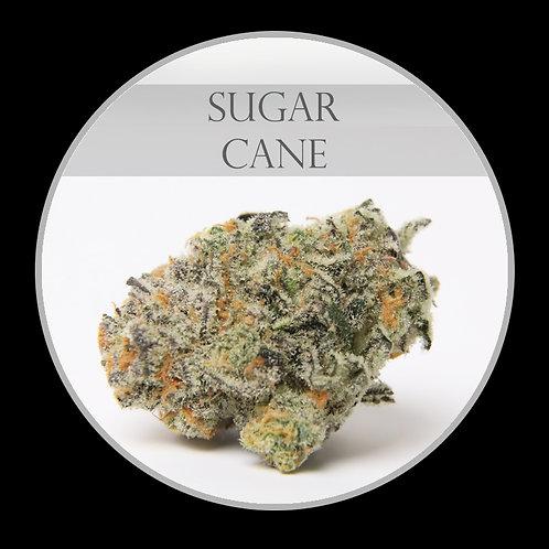 Sugar Cane AAAA